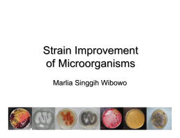 Strain Improvement of microorganisms