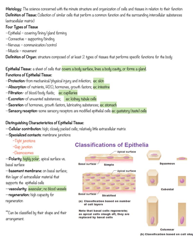 Definition of Tissue