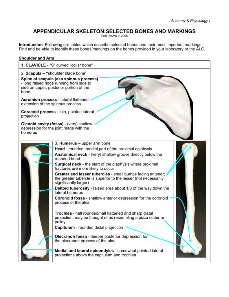 Lab 6: Skeletal