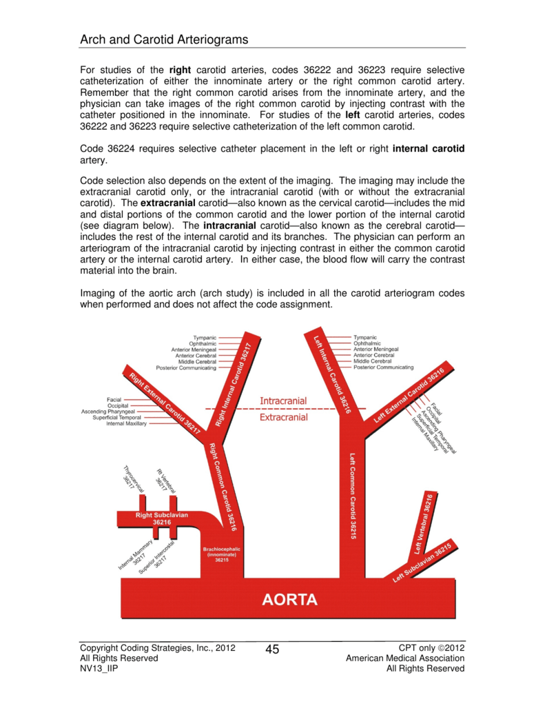 arch and carotid arteriograms for studies of the right carotid arteries,  codes 36222 and 36223 require selective catheterization of either the  innominate