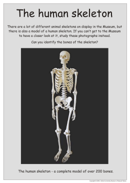 The human skeleton - Oxford University Museum of Natural History
