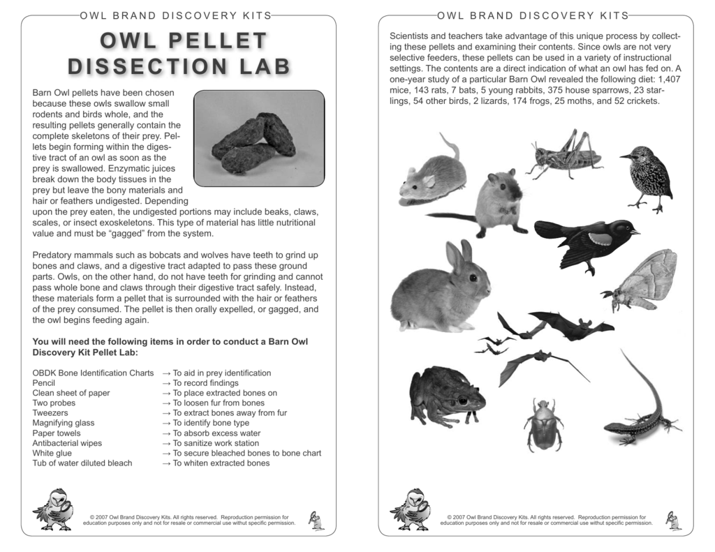 owl pellet dissection lab - Owl Brand Discovery Kits