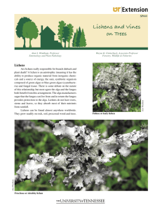 Lichens and Vines on Trees - University of Tennessee Extension