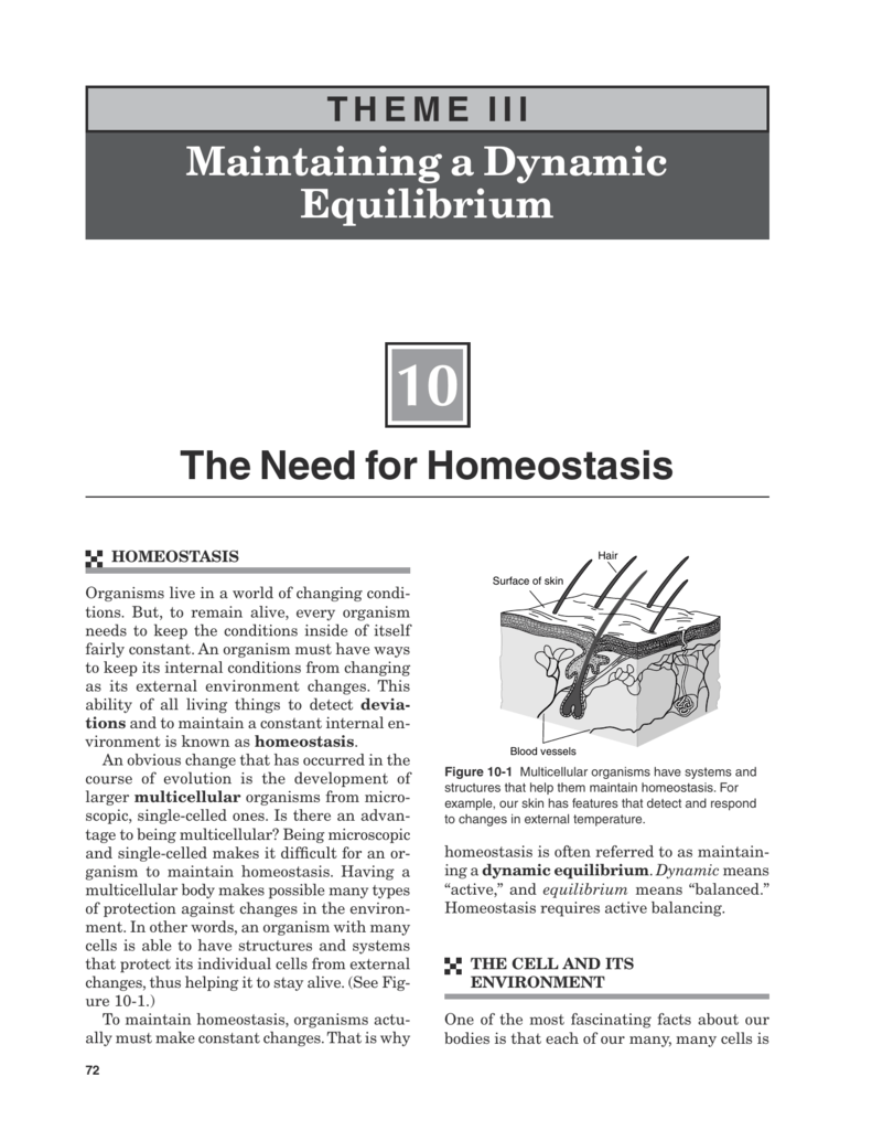 Maintaining A Dynamic Equilibrium The Need For Homeostasis