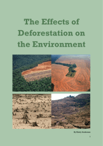 The Effects of Deforestation on the Environment