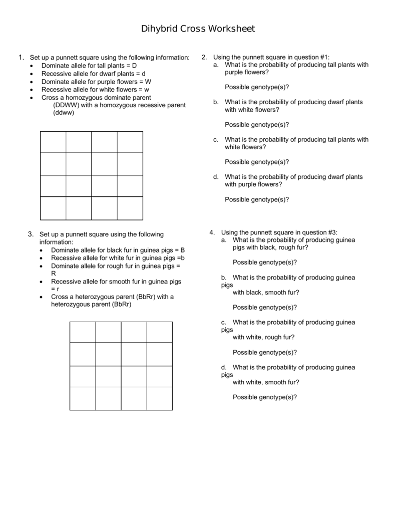 dihybrid cross worksheet worksheets kristawiltbank free printable worksheets and activities. Black Bedroom Furniture Sets. Home Design Ideas