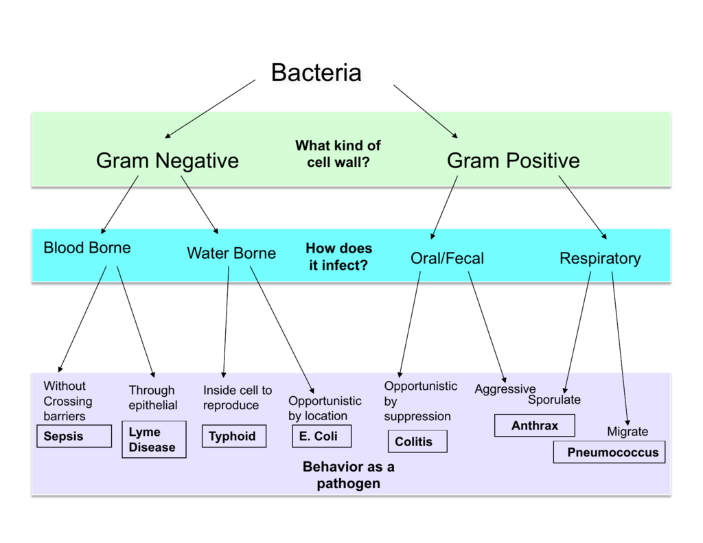 Unknown Flow Chart Microbiology Rebellions