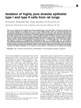 Isolation of highly pure alveolar epithelial type I and type II cells from
