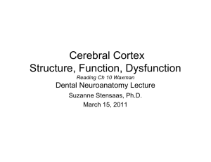 Cerebral Cortex Structure, Function, Dysfunction