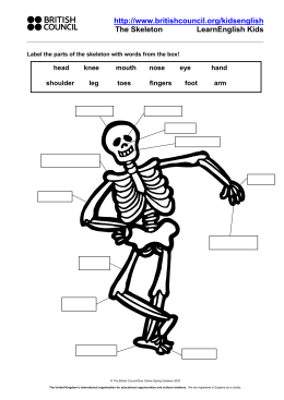 Label the parts of the skeleton with words from the box
