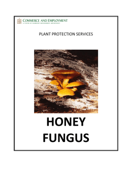 Honey Fungus Plant Protection Services Honey Fungus Leaflet