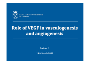 Role of VEGF in vasculogenesis and angiogenesis