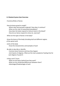 2.2 - Skeletal System Quiz Outline 2015