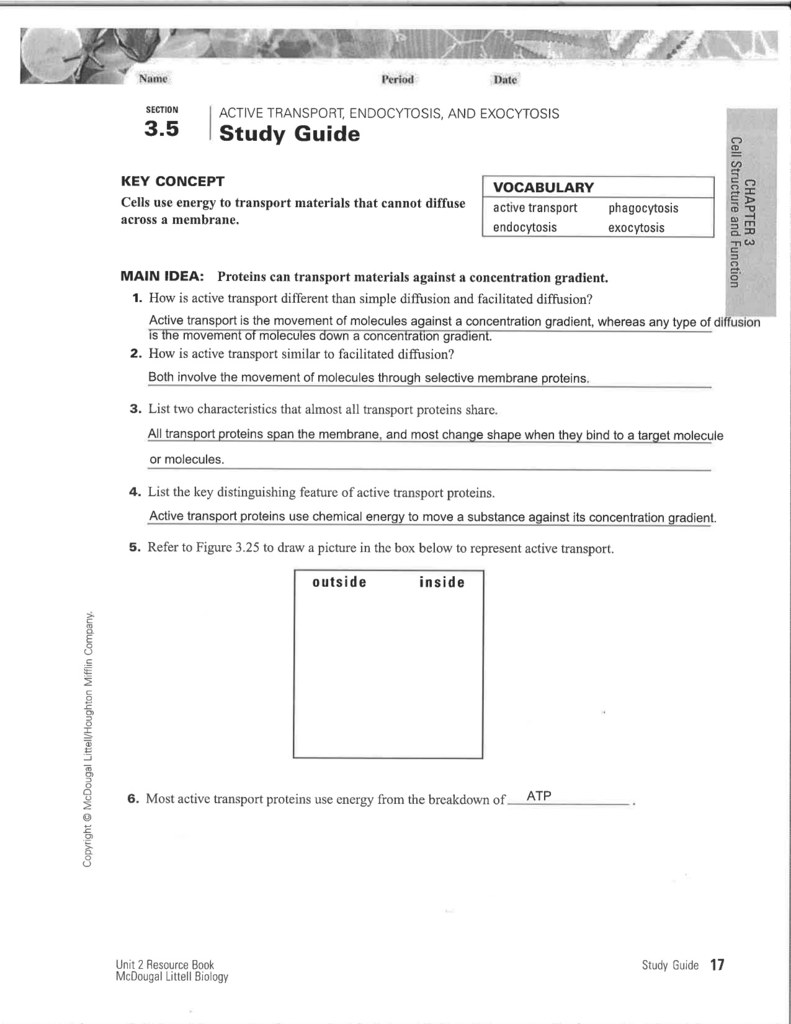 Uncategorized Active Transport Worksheet study guide science with ms ortiz