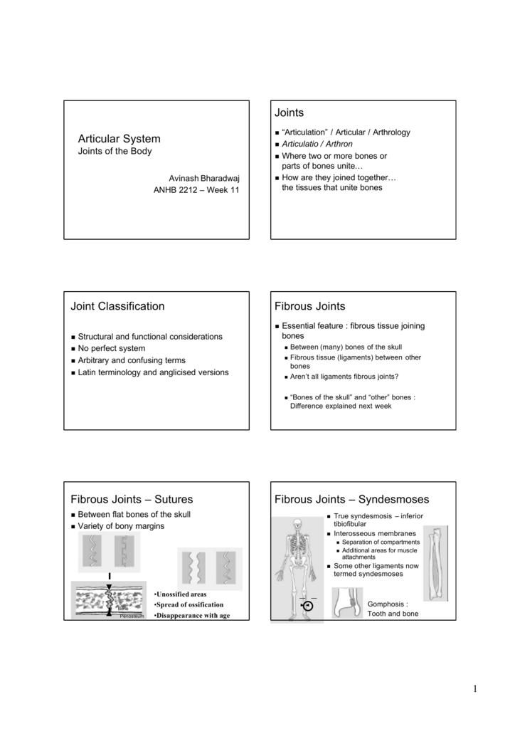 Articular System Joints Joint Classification Fibrous Joints Fibrous Latin afrikanca arnavut arapça ermeni bosnalı katalanca çin çek danimarka hollanda i̇ngilizce esperanto fince fransızca almanca yunan nasıl telaffuz edildiğini öğrenmek synchondrosis. articular system joints joint