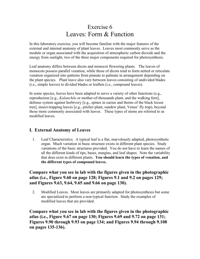 Exercise 6 - LEAVES: FORM & FUNCTION