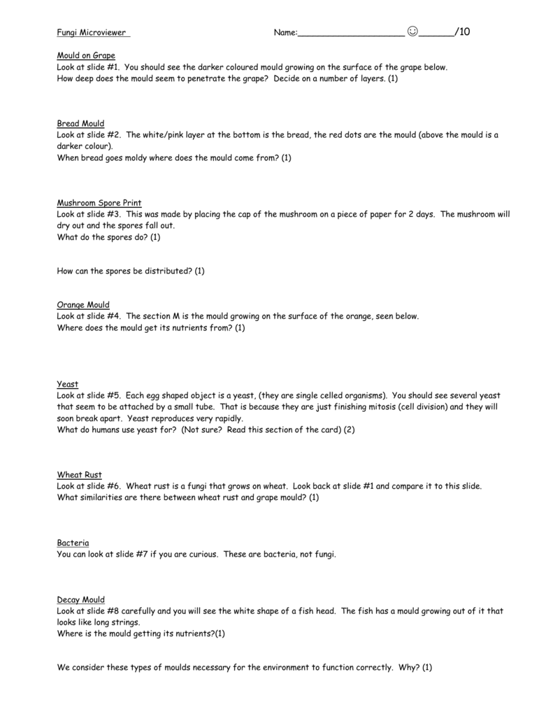 Fungi Worksheet