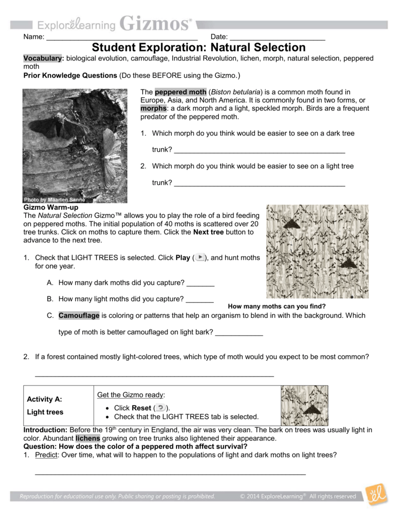 Types Of Natural Selection Worksheet Answers
