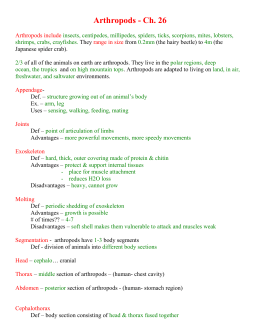 Ch. 26 Arthropods notes 2007