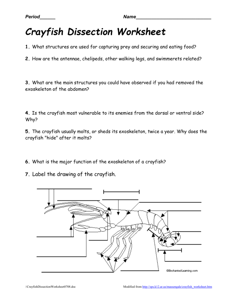 Worksheets Crayfish Dissection Worksheet crayfishdissectionworksheet0708