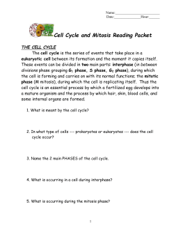 Cell Cycle And Mitosis Worksheet Answers - Karibunicollies