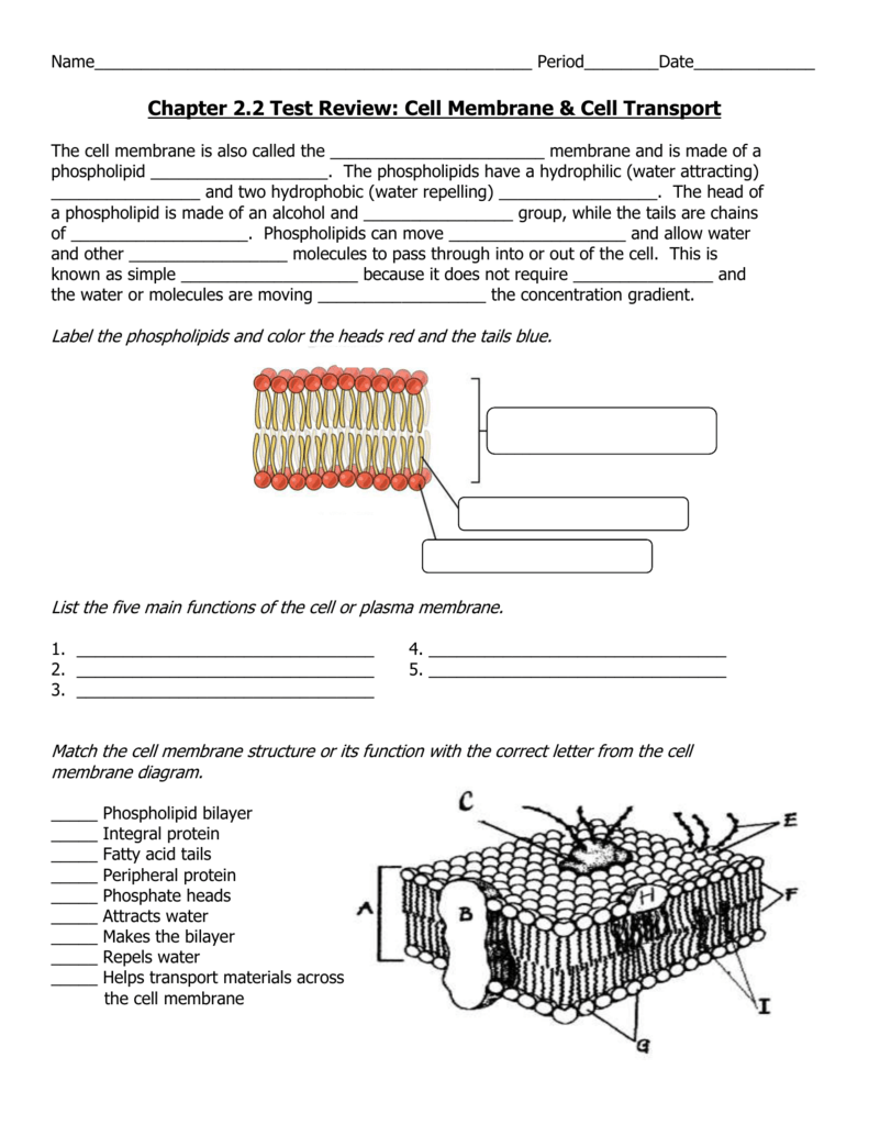 worksheet. Plasma Membrane Worksheet. Grass Fedjp Worksheet Study Site