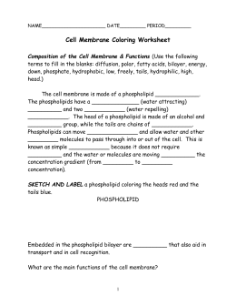 Cell Membrane Coloring Worksheet Composition of the Cell