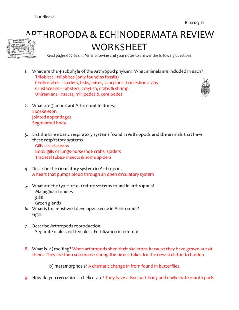 arthropoda & echinodermata review worksheet