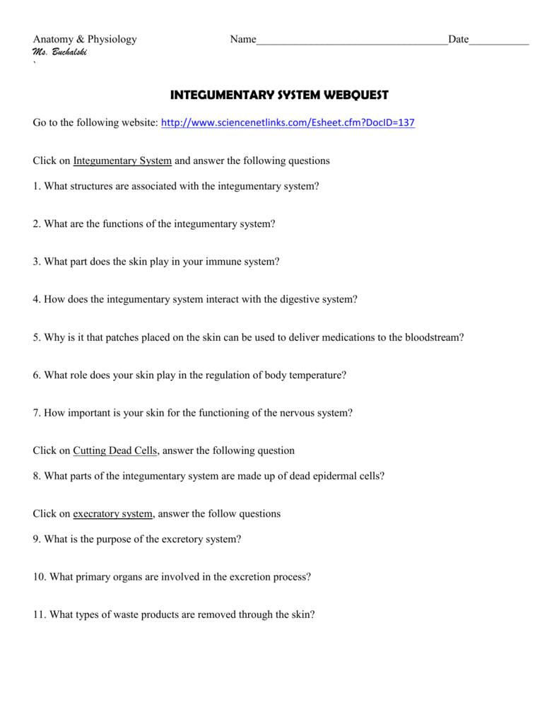 integumentary system webquest – Integumentary System Worksheets