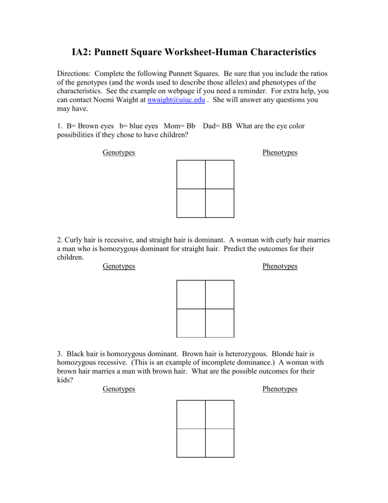 punnett square worksheet human characteristics answers Termolak – Punnet Square Worksheet