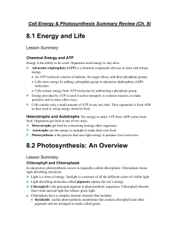 Answers to the Energy and Photosynthesis Study Guide