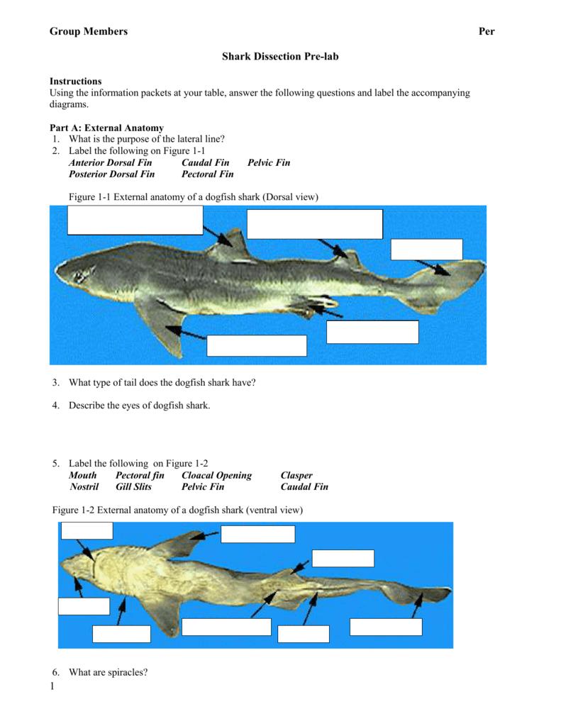 Shark Dissection Pre-lab - mrsferrersaquaticscience