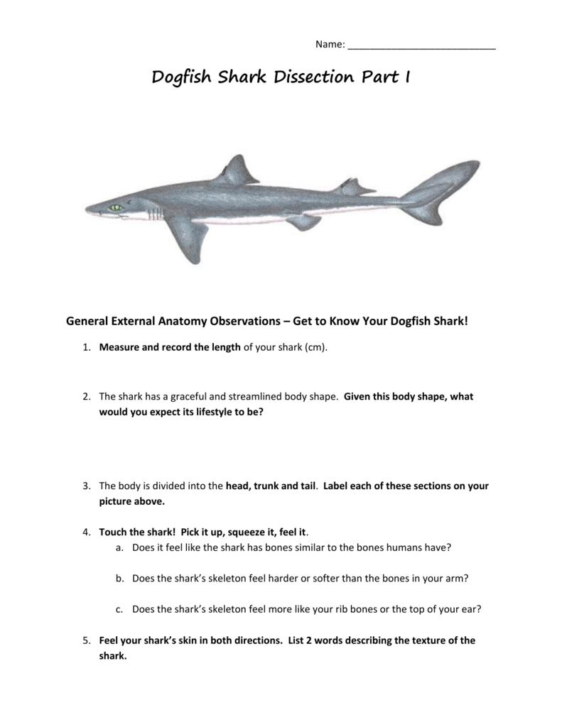 Dogfish Shark Dissection Part I