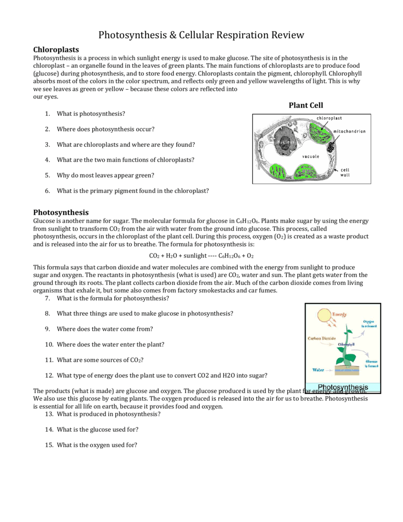 Photosynthesis Review Worksheet