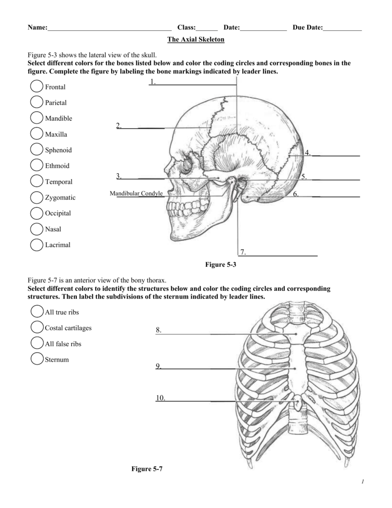 The Axial Skeleton