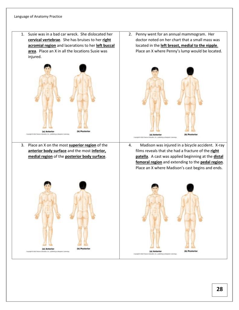 Language of Anatomy Practice