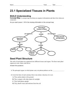 23.1 Plant Tissues Worksheet