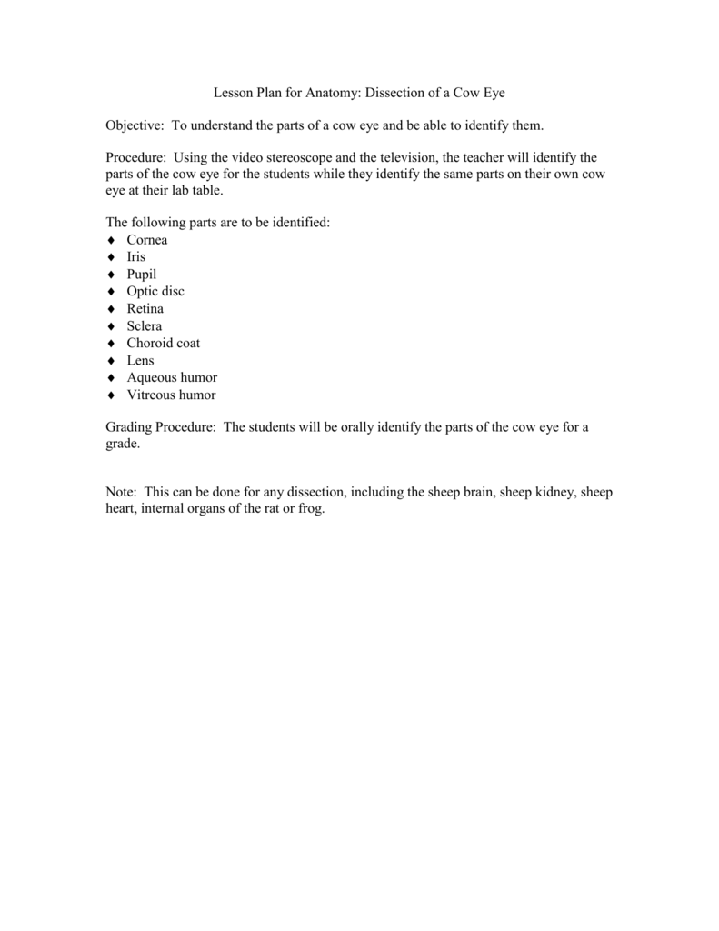 Worksheets Cow Eye Dissection Worksheet lesson plan for anatomydissection of a cow eye