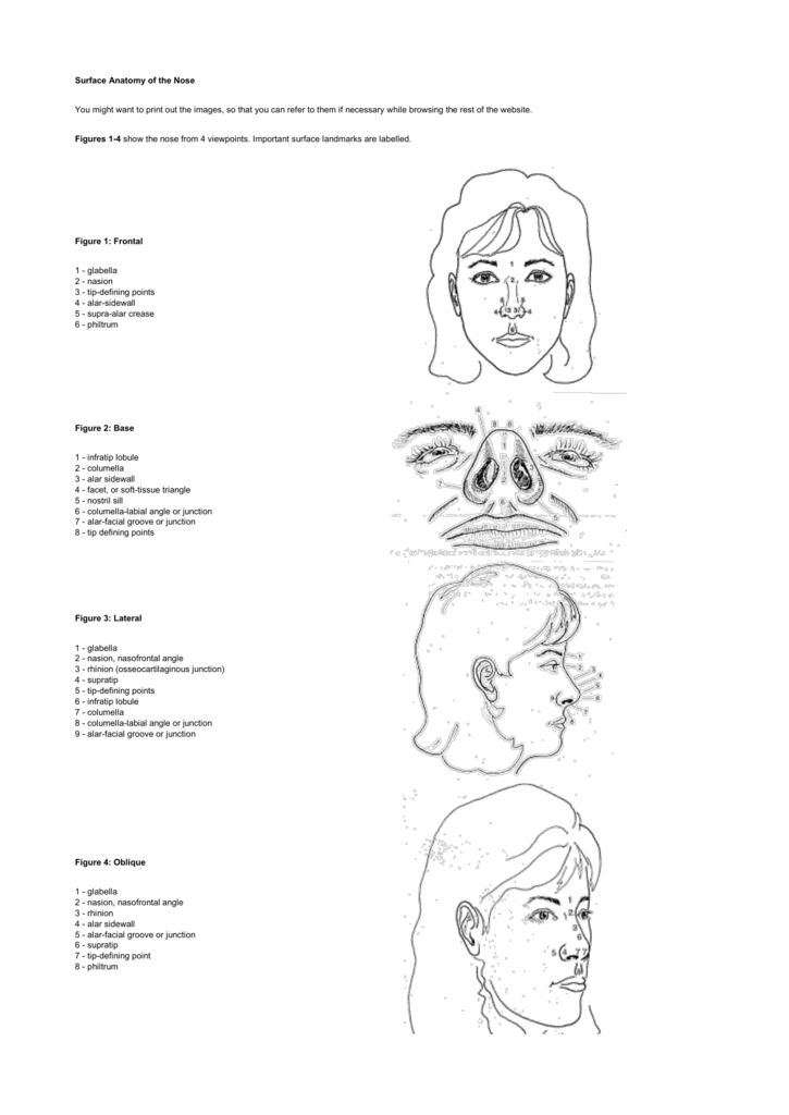 Surface Anatomy of the Nose