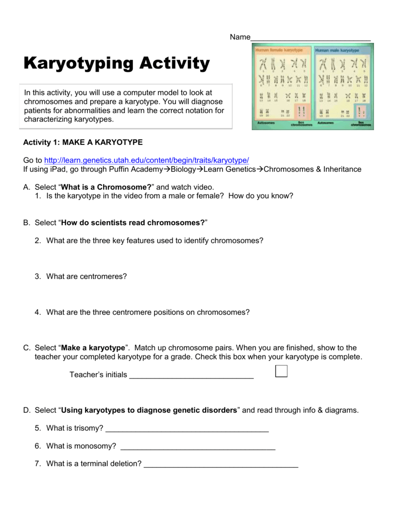 Karyotyping Activity line