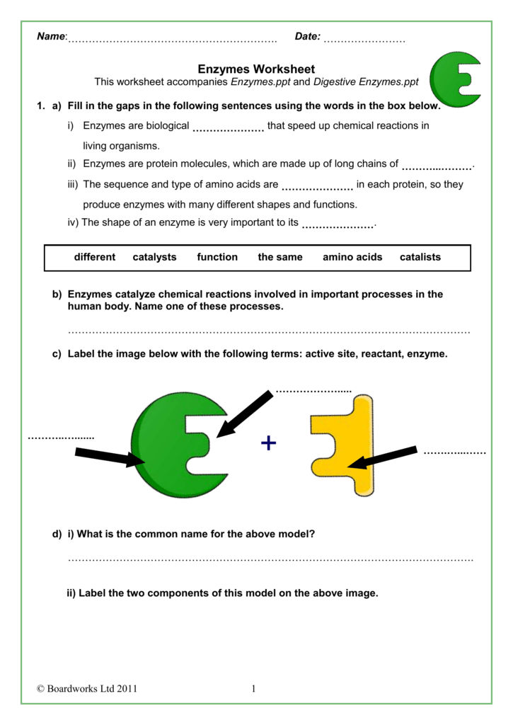Enzymes &amp- digestion by Dave_gar - Teaching Resources - Tes