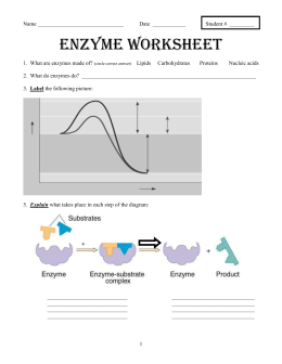 enzymes worksheets calleveryonedaveday. Black Bedroom Furniture Sets. Home Design Ideas