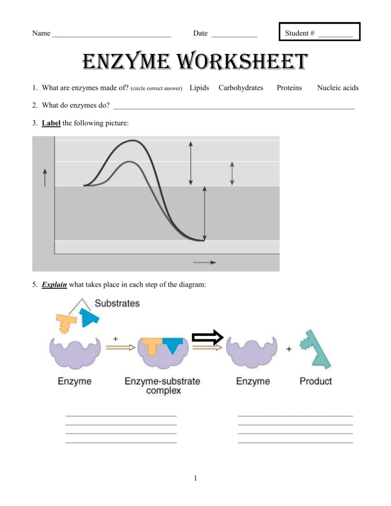 Worksheets Enzyme Worksheet enzyme worksheet