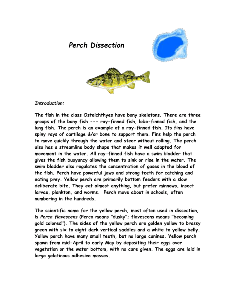 Perch Dissection - BronxPrepAPBiology