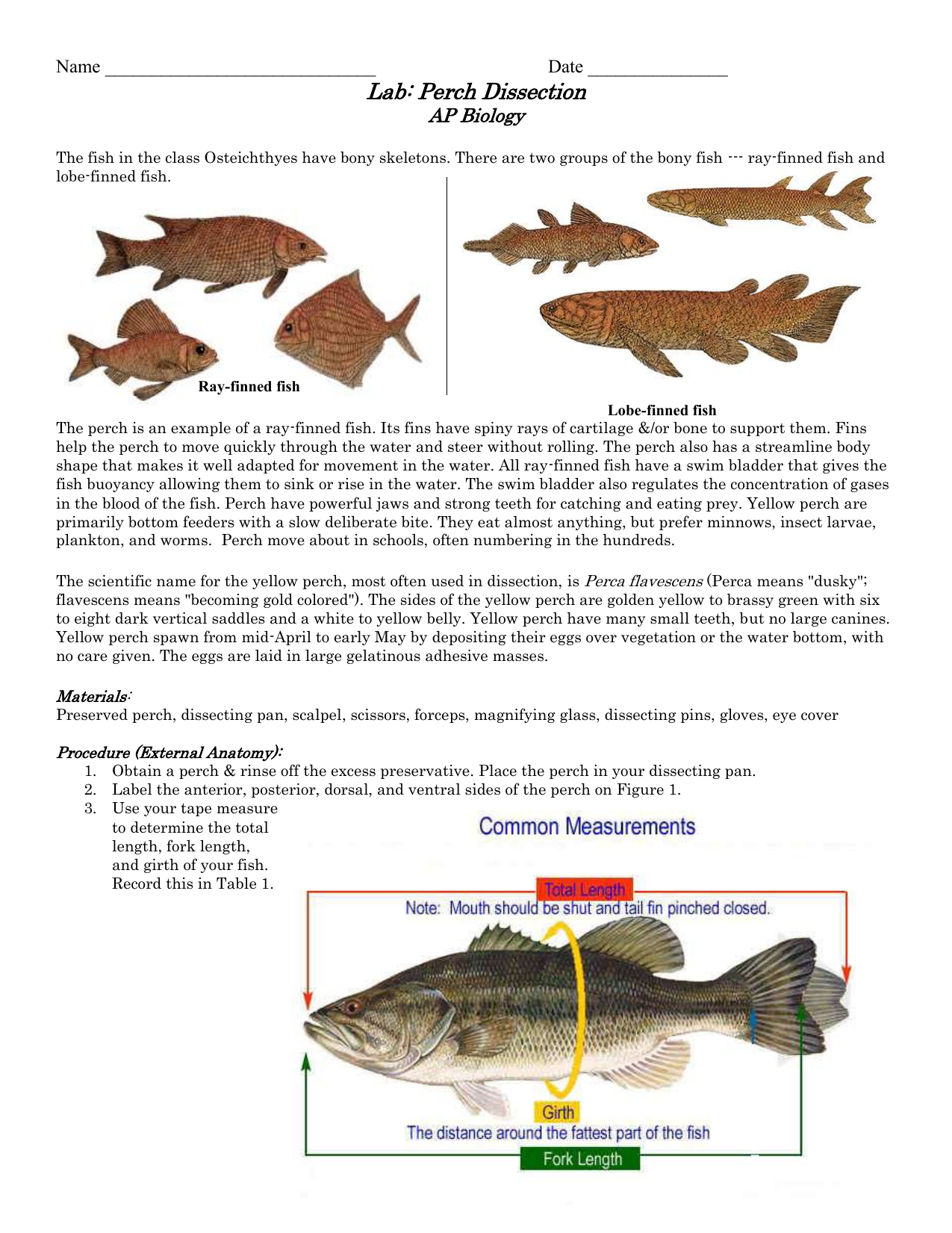Perch Dissection - APBiologyIsSuper