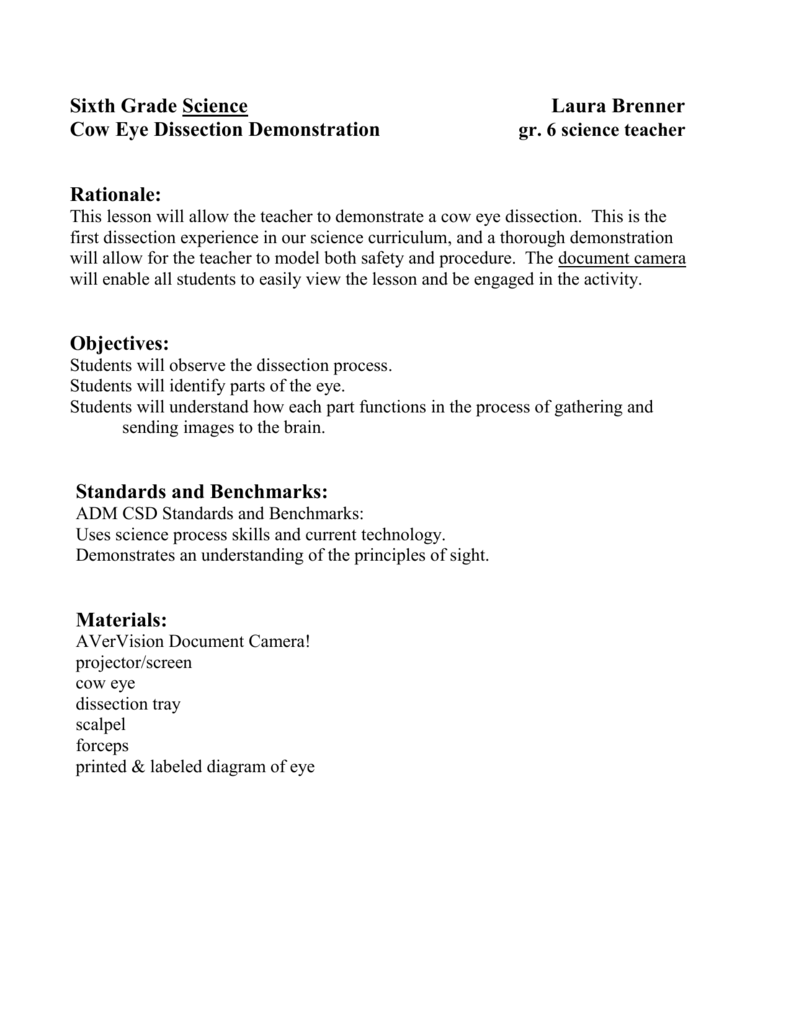 Worksheets Cow Eye Dissection Worksheet grade 6 cow eye dissection