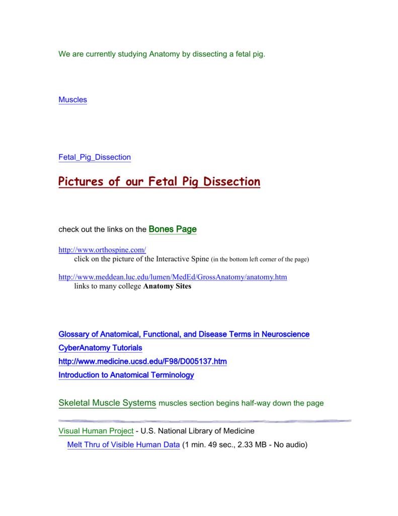 Fantástico Human Anatomy And Physiology Terminology Festooning ...