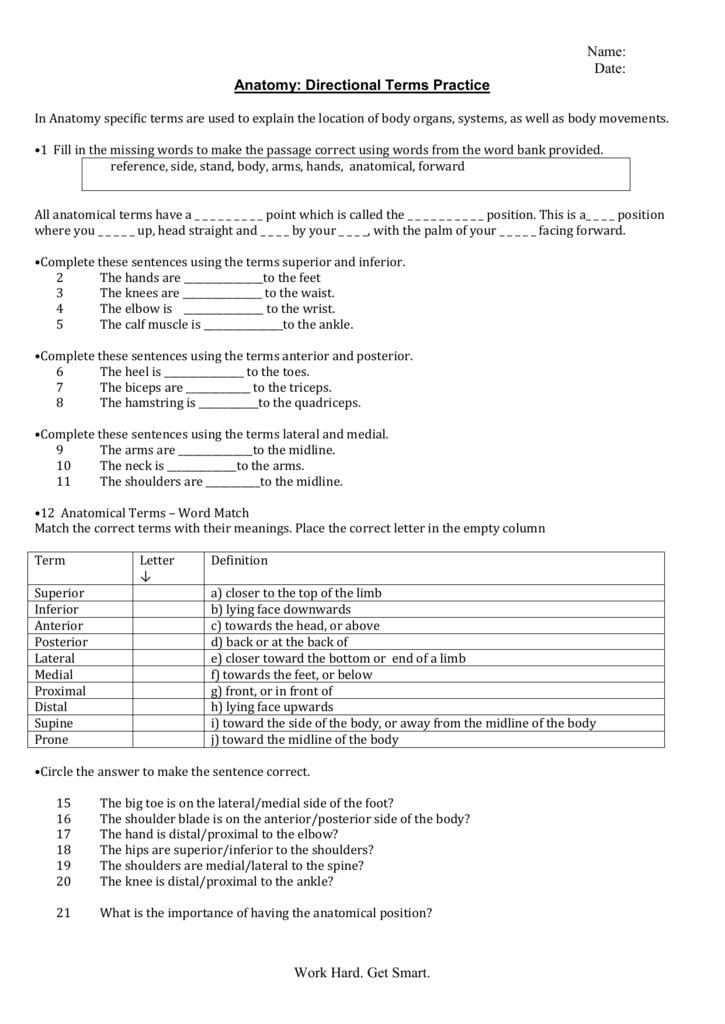 Anatomical Terms Worksheet – Anatomical Directional Terms Worksheet