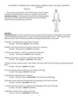 Anatomical Terminology Worksheet - TCHS