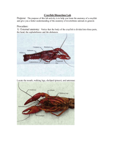 Crayfish Dissection Lab